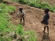 Travail des enfants au Mali