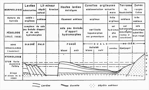 La vall e du fleuve s n gal caract ristiques biophysiques - Les differents types de sols ...